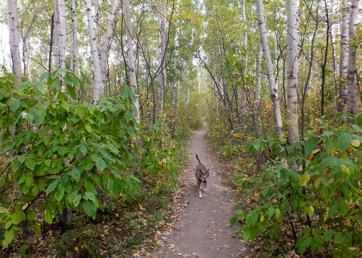 Maggie enjoying a Terwilligar monkey trail