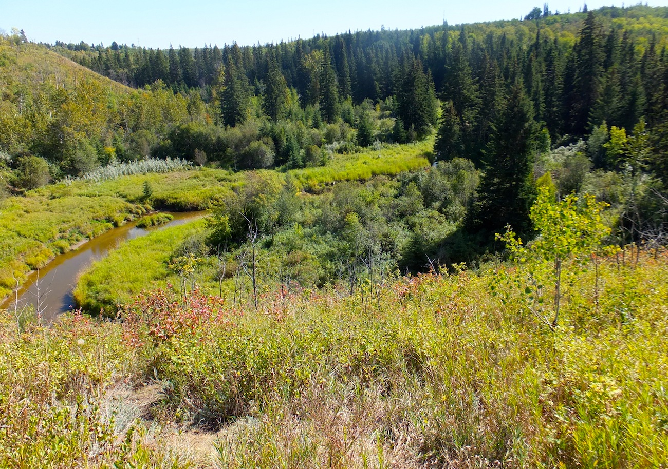 Whitemud Creek Ravine