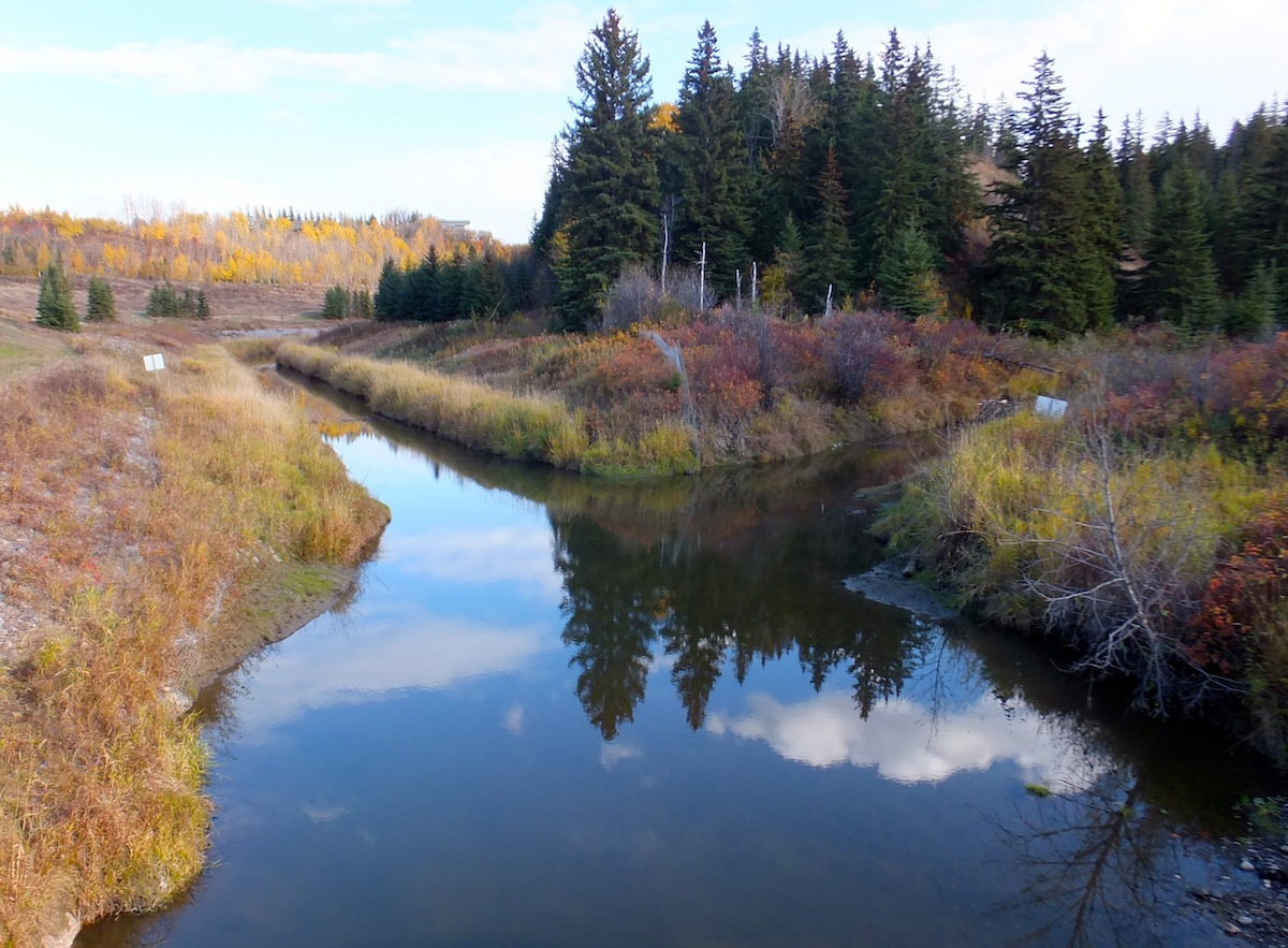 A friendly meeting of the Whitemud and Blackmud Creeks