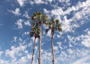 Scottsdale-Anthem palms at outlet mall