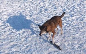 Maggie's stick