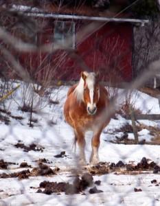 Barred Horse
