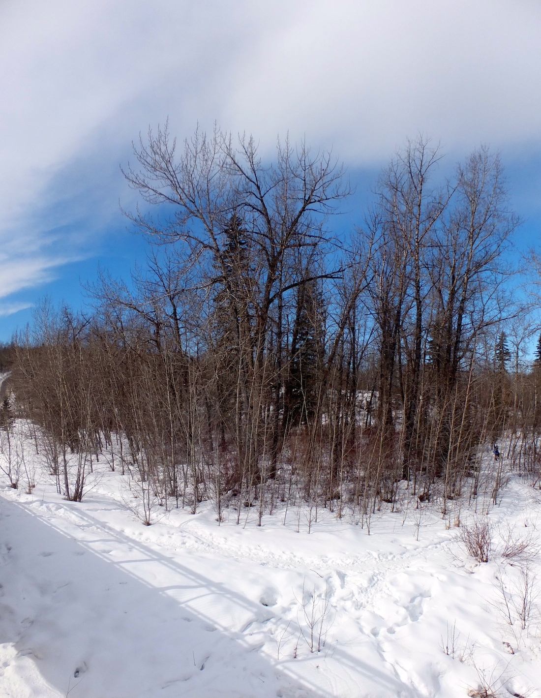 A pocket of blue in Whitemud Ravine