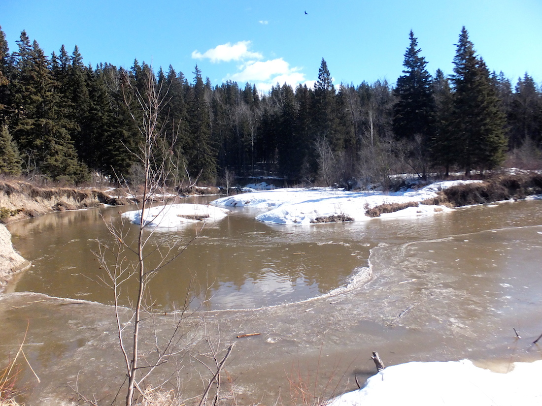 Whitemud creek in spring