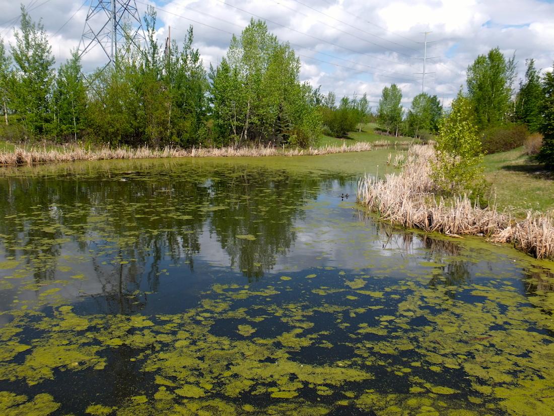 Powerline 'wetlands'