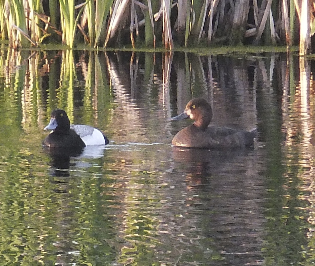 Old Coot & wife