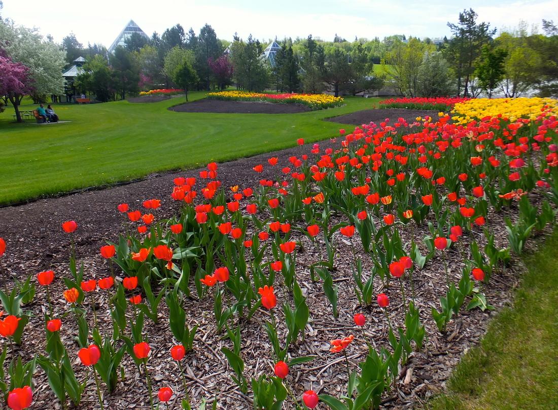 Muttart Conservatory grounds