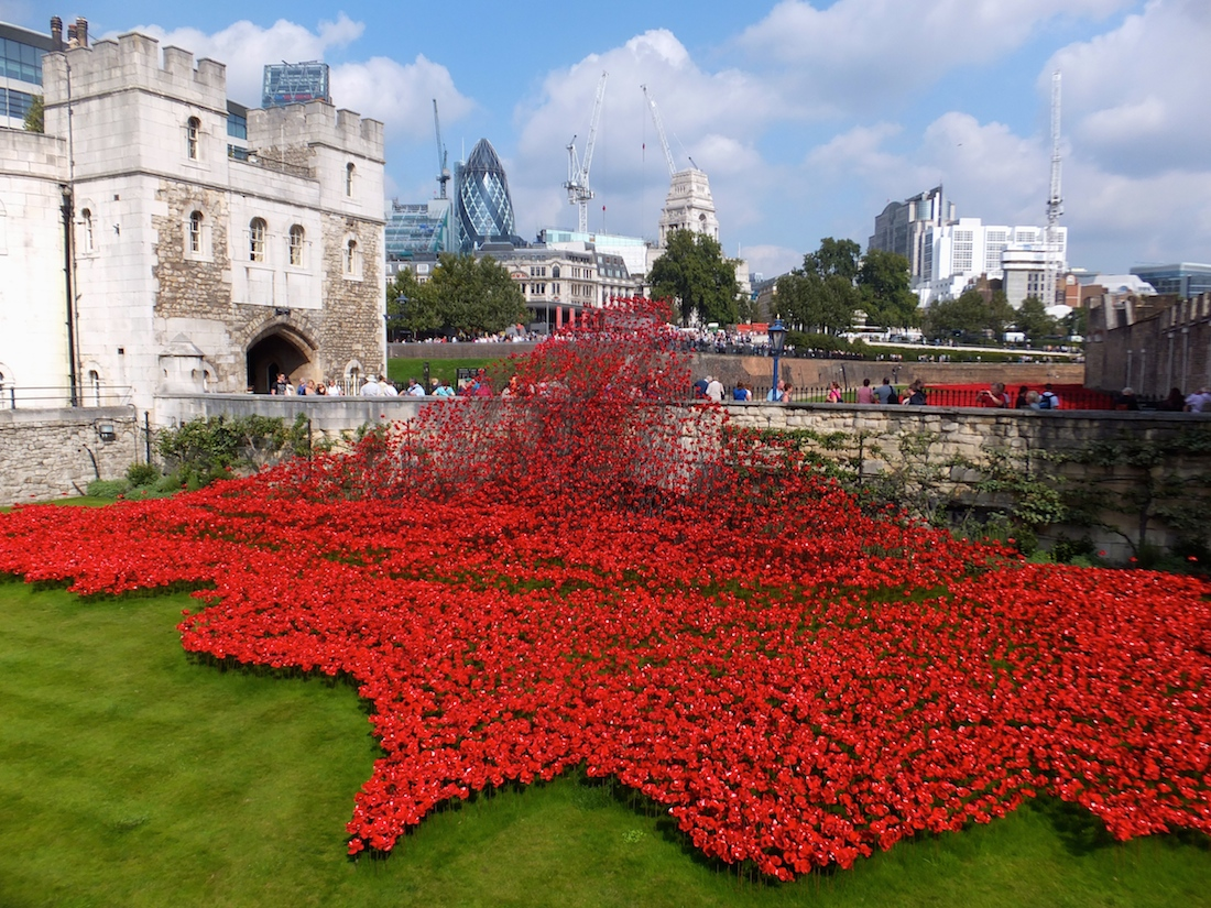 1B.Tower of London Red Poppies