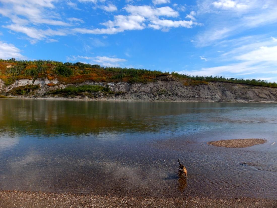 A beautiful North Saskatchewan River (and dog.)