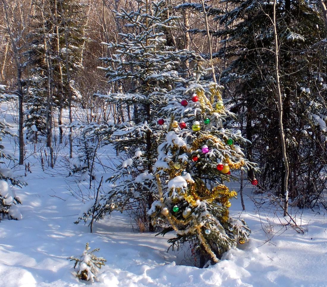 Mill Creek Christmas Tree