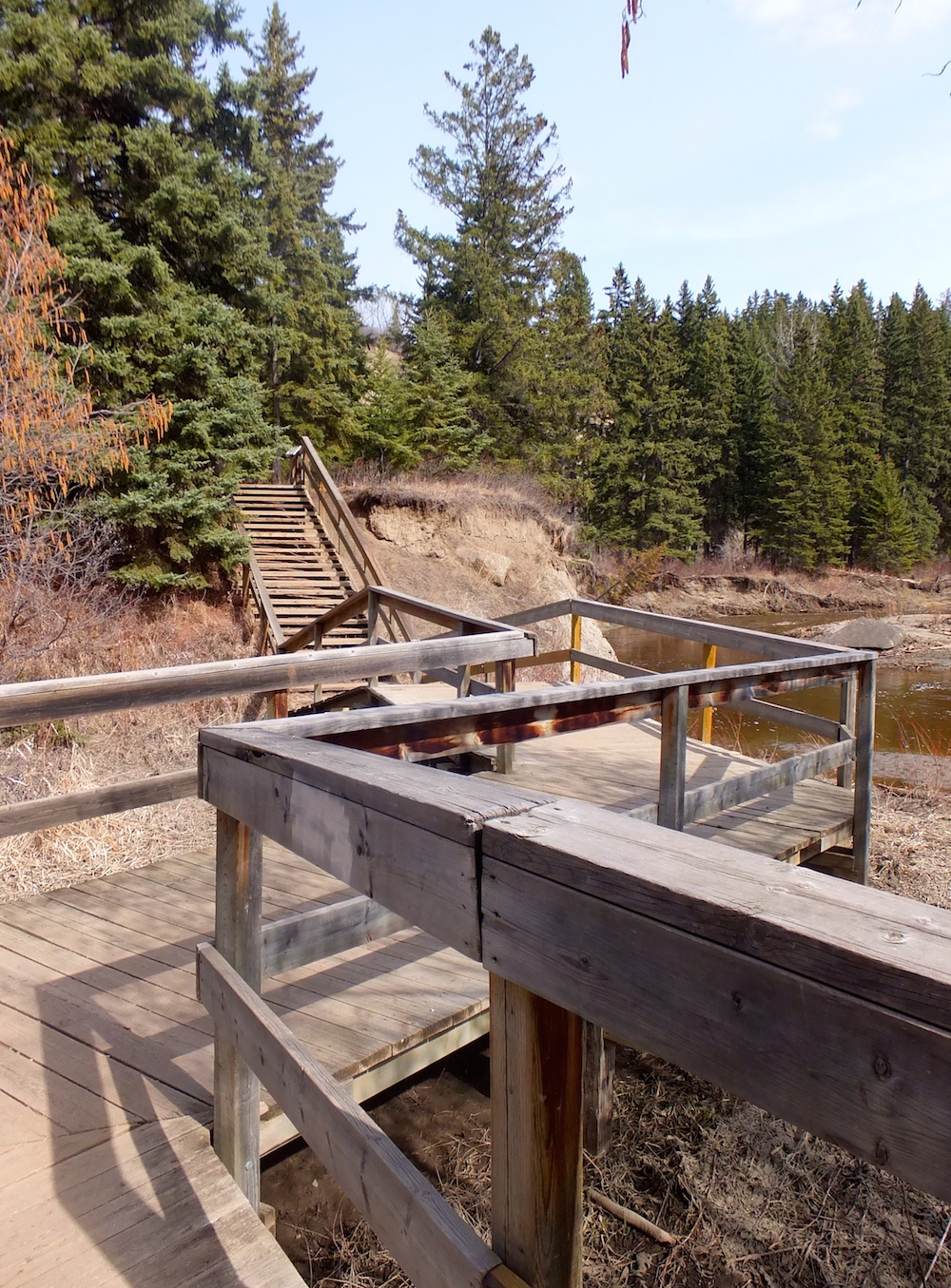 To the right of the boardwalk-Whitemud Creek. To the left, a new monkey trail.