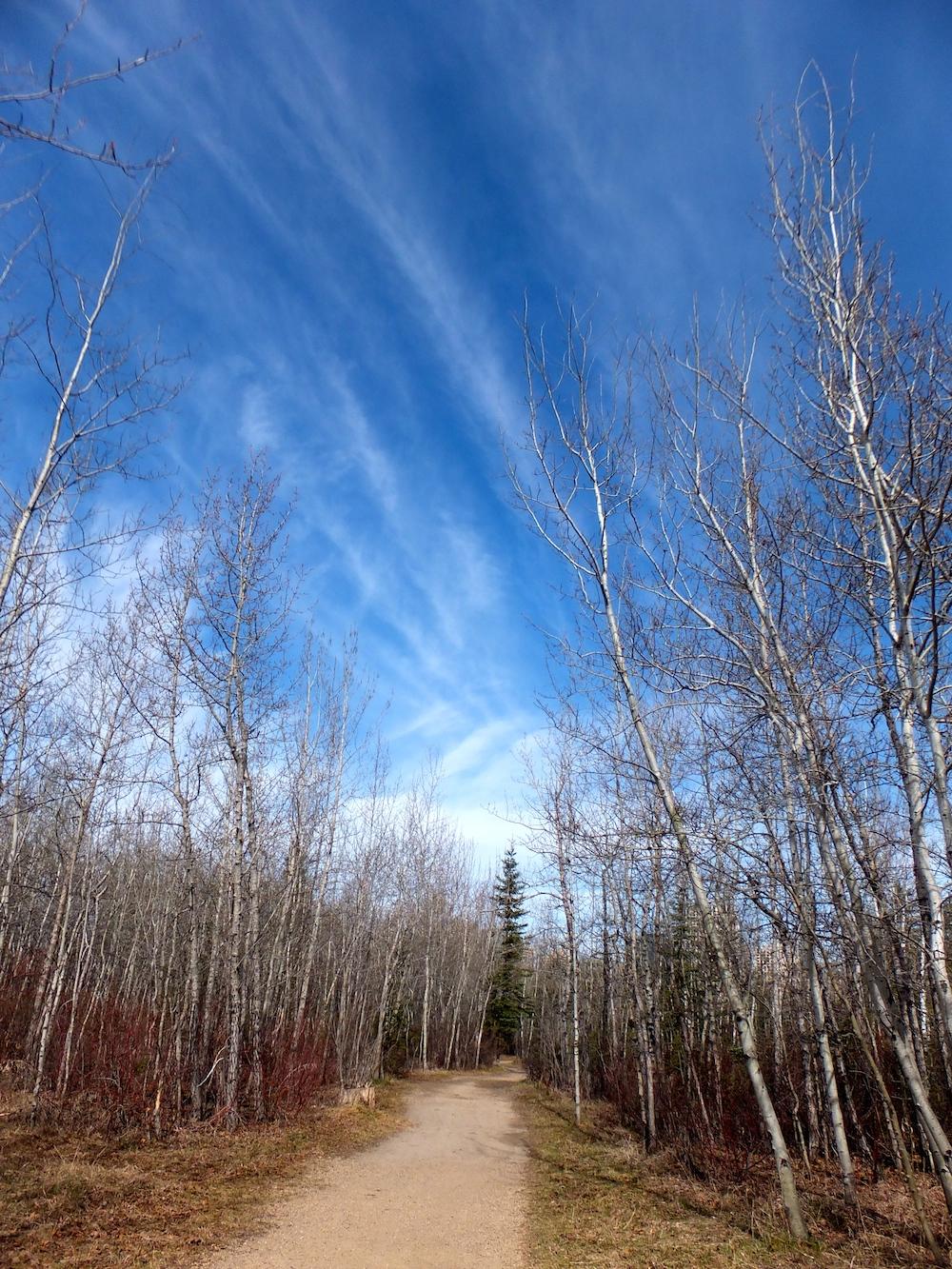 Mill Creek Skies