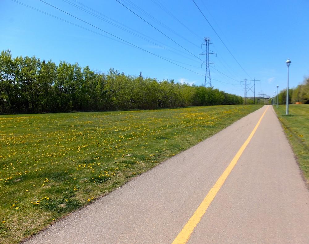 The powerline field is lousy with dandelions