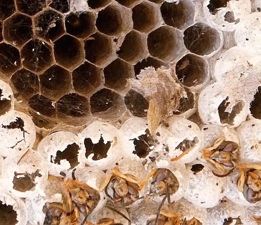 Wasp 2 detail