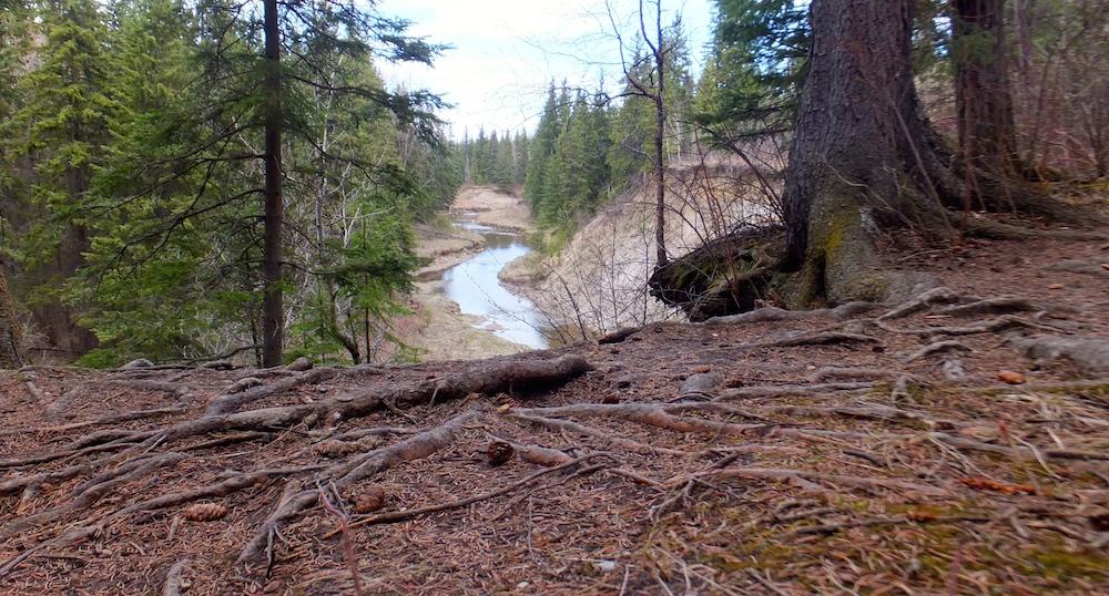 Whitemud Creek above the Aspen Gardens entrance