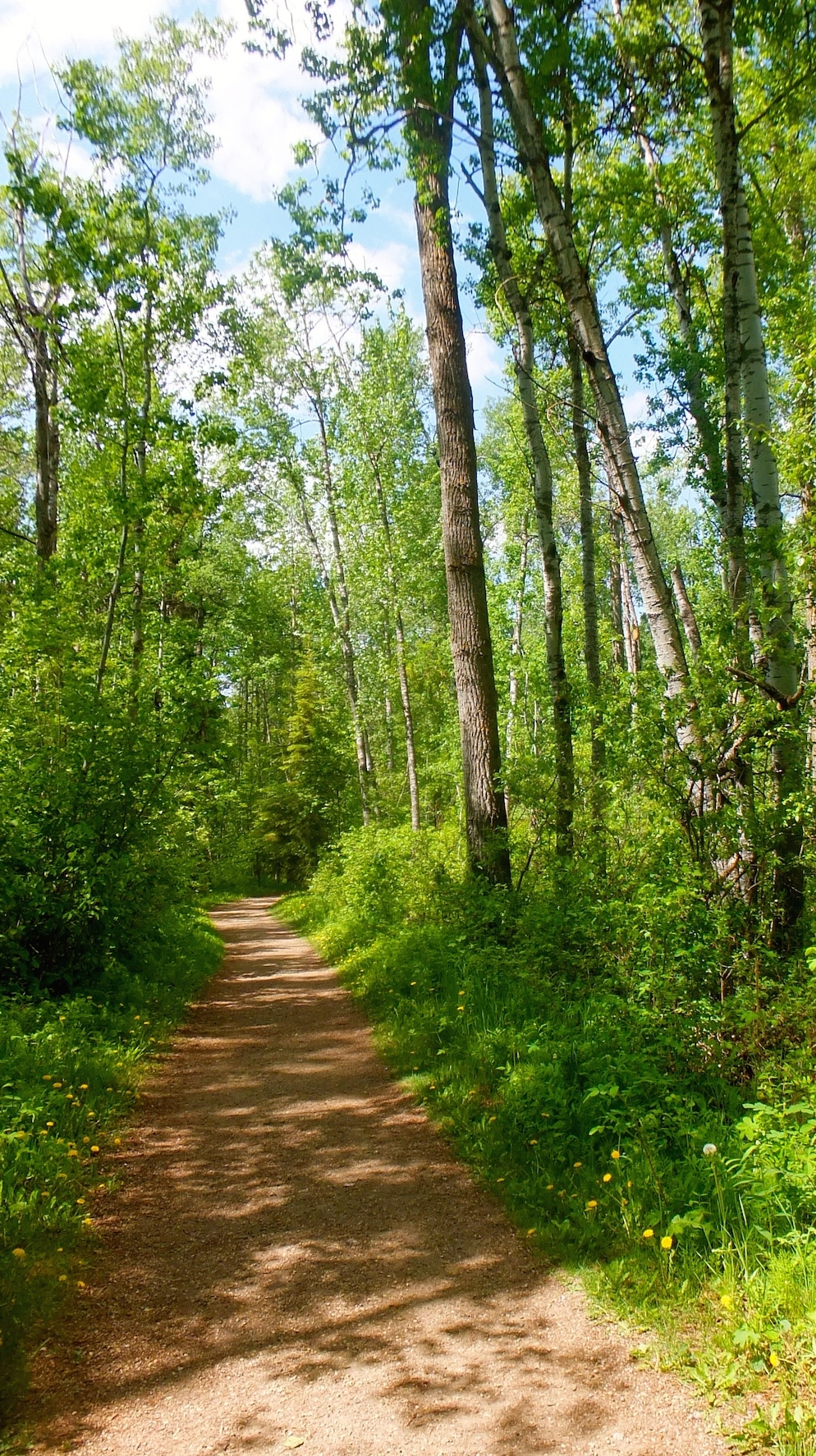 A very cropped photo of a Whitemud Creek trail
