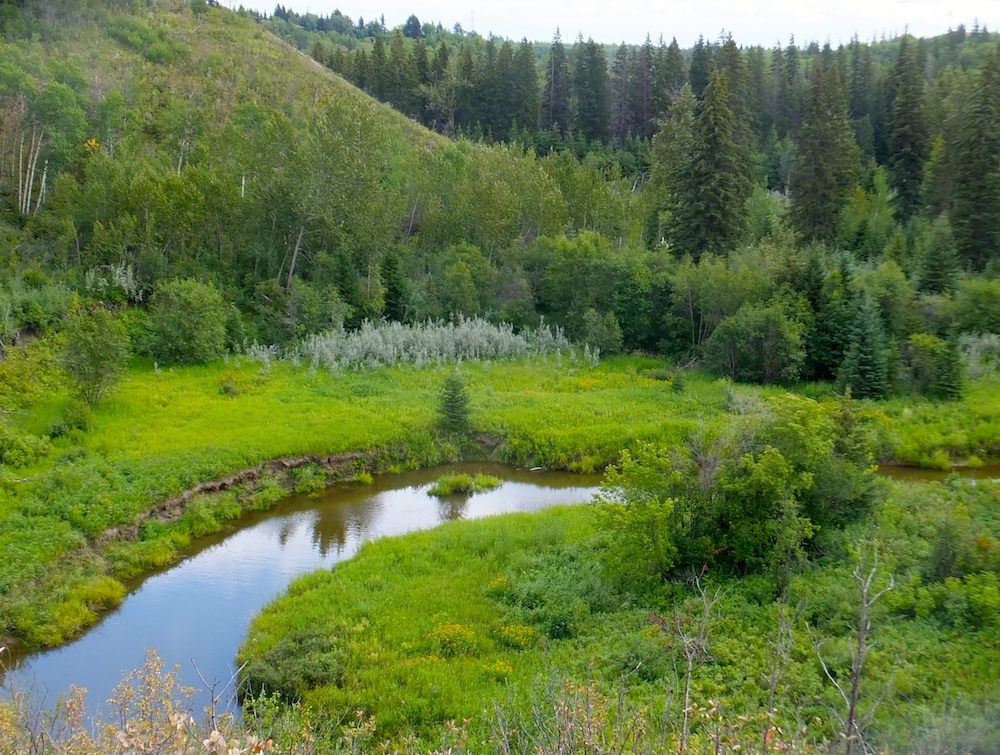 Whitemud Ravine on a cloudy day