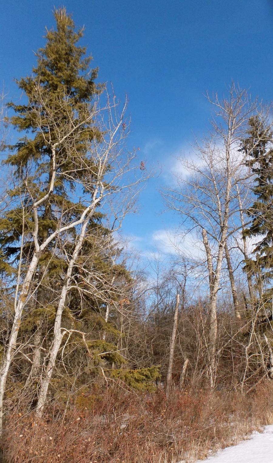 Friday Hawrelak trees