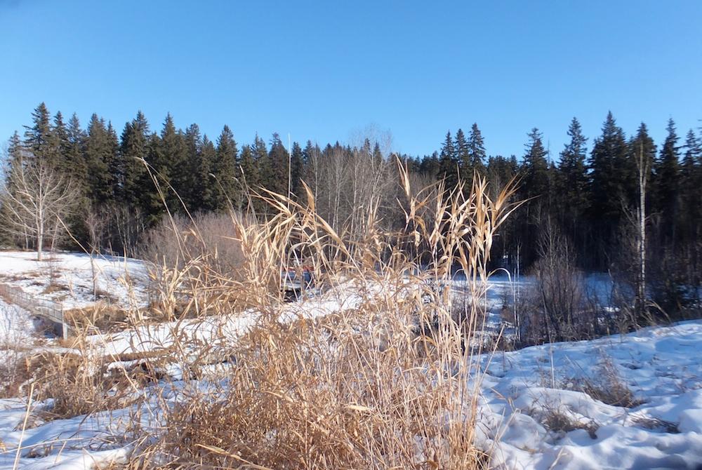 Mill Creek Ravine last Sunday