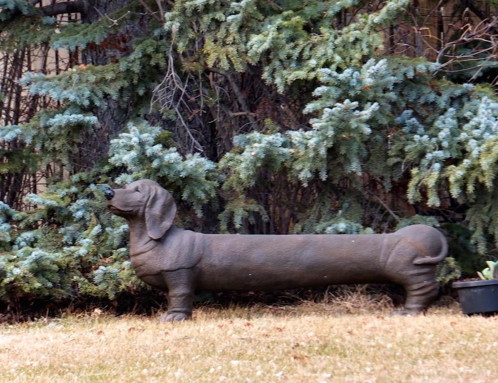 Glenora weiner dog