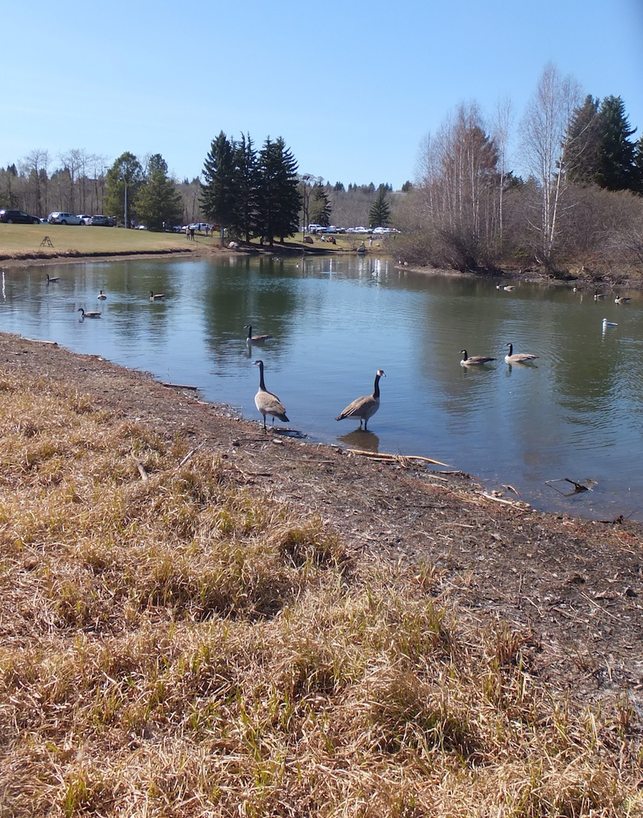 Hawrelak Lake