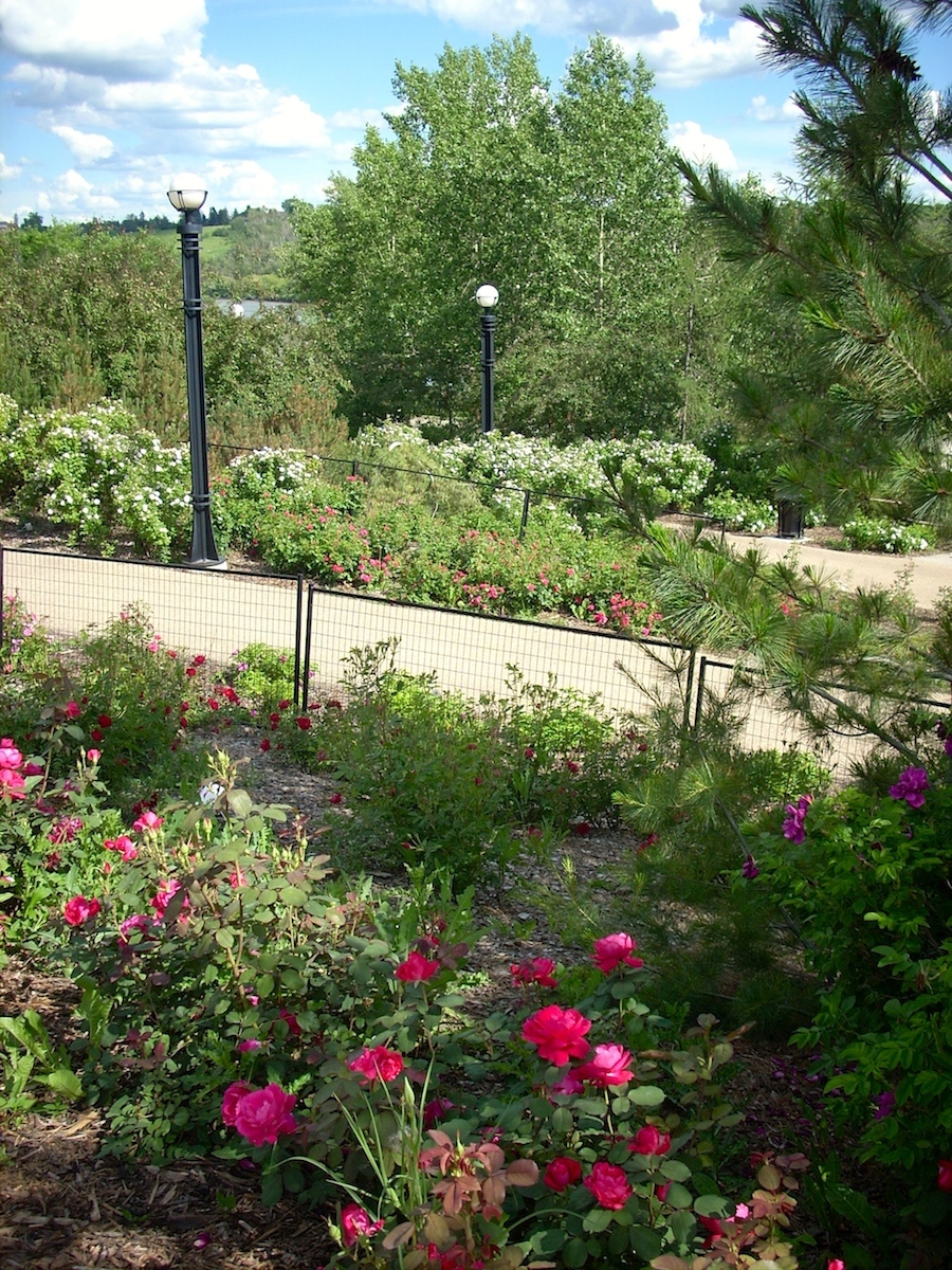 Rose garden on the north end of the bridge two years ago