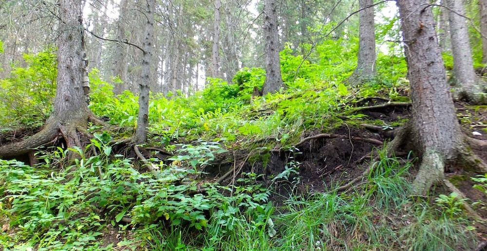 Raised forest floor