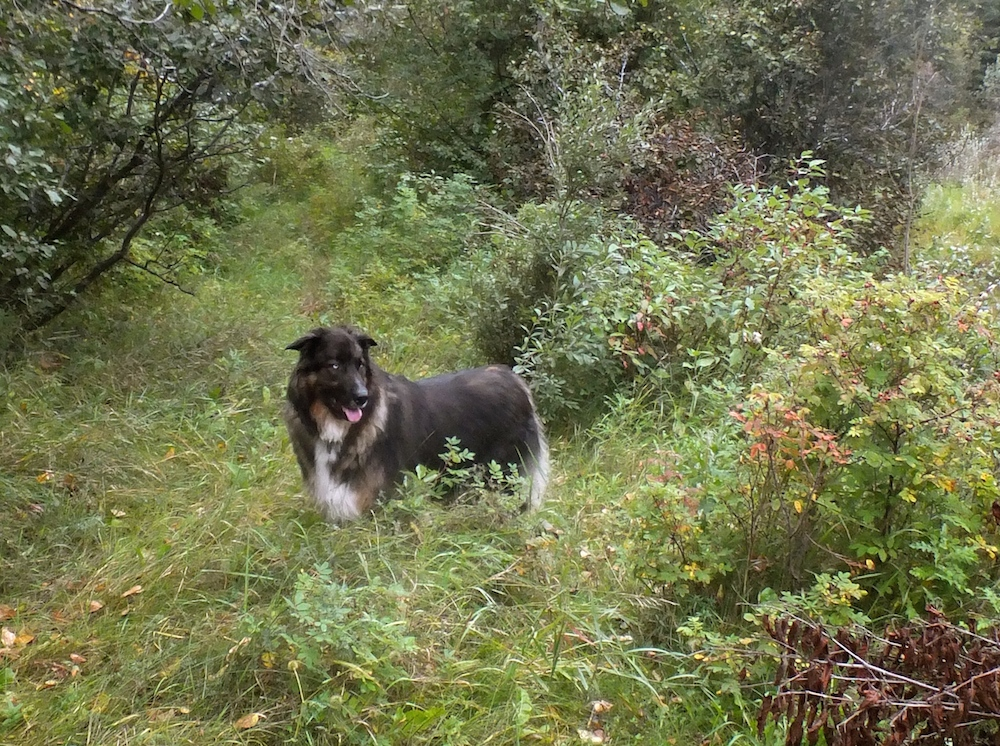 Teddy of the bush