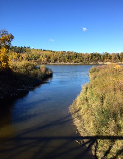 Whitemud Creek meets the river