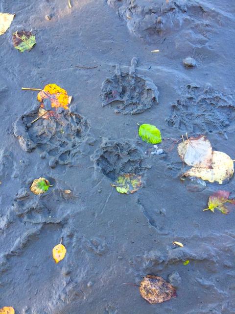 whitemud-mud-leaves