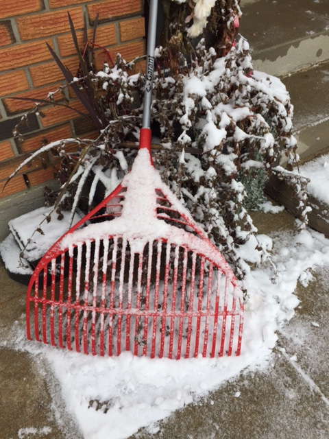 Poor rake. Brand new and never got a chance to collect a single leaf. We will never know its potential. #RIPrake