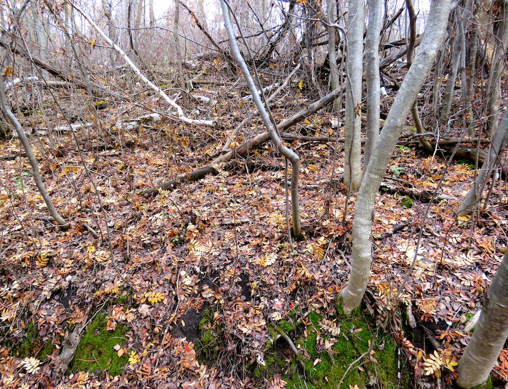 forest-floor