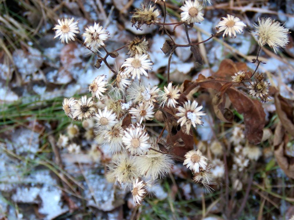 whitemud-flowers