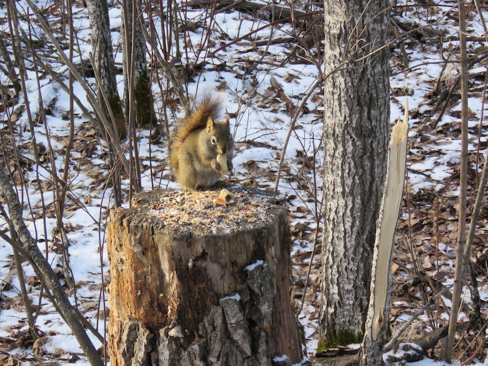 Hold on to your nuts, squirrel. It's gonna get cold. Real cold.
