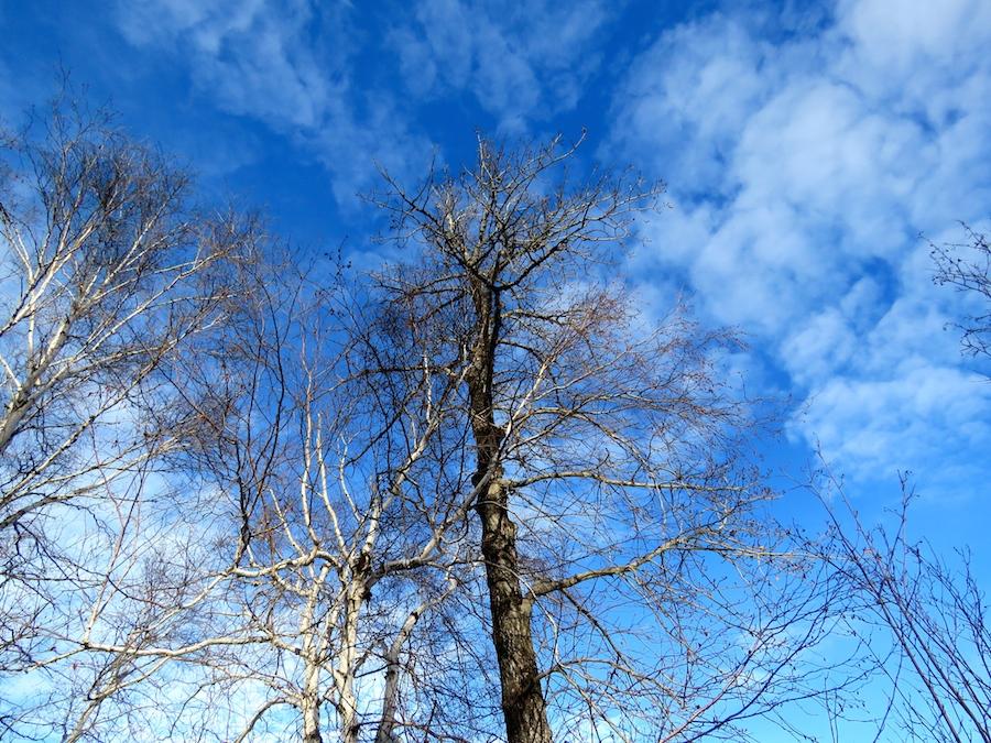 Hawrelak sky