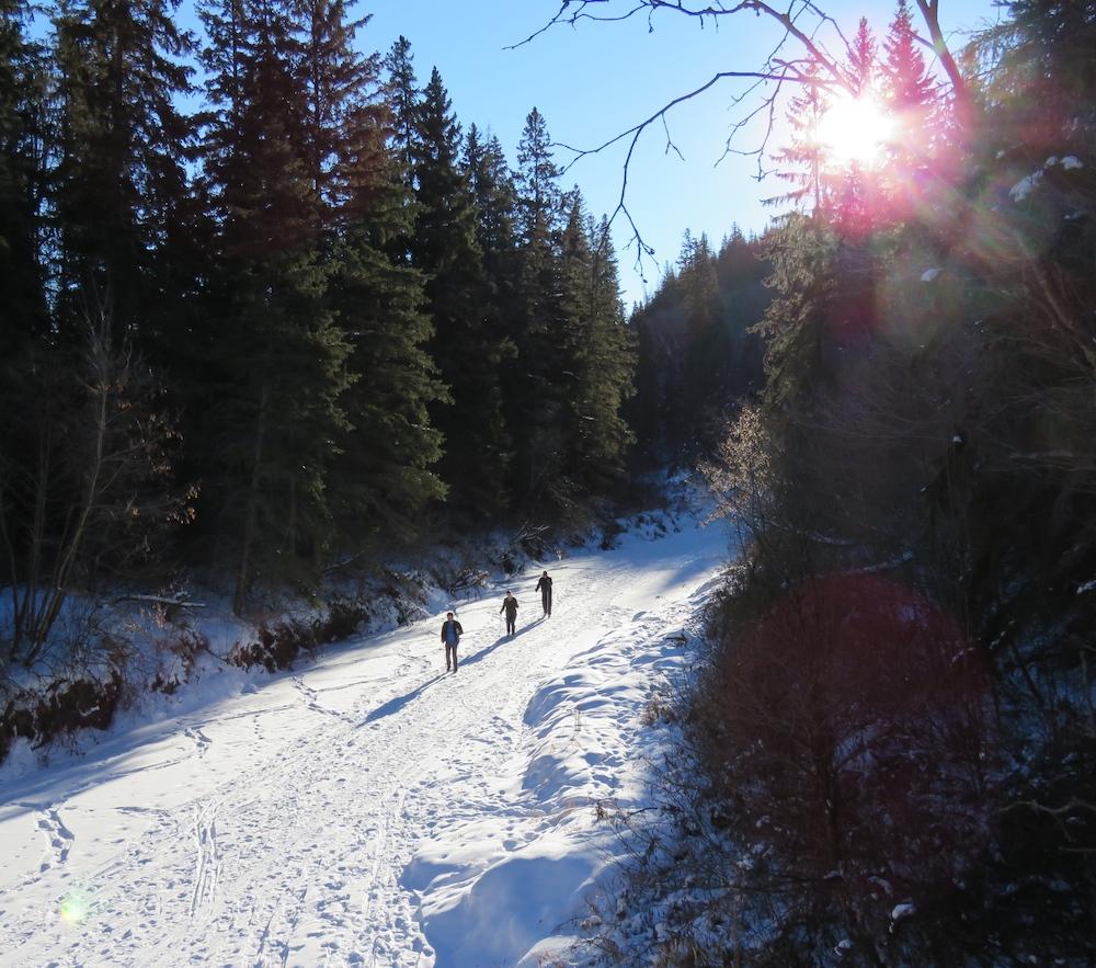 Whitemud creek walkers